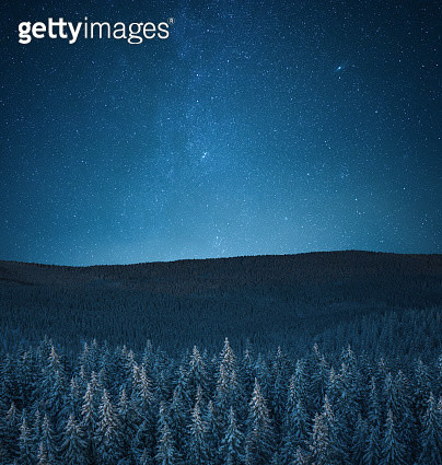 Snowcapped Forest Under The Stars - gettyimageskorea