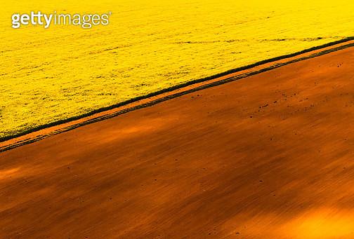 Diagonal Fields - gettyimageskorea