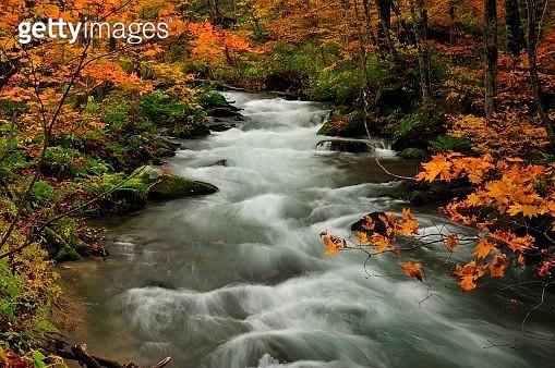 Oirase Stream (Oirase Keiryū) is a picturesque mountain stream in Aomori. - gettyimageskorea