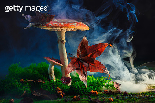 Fairy hiding behind a maple leaf silhouette. Giant magical mushroom, fantasy story concept - gettyimageskorea