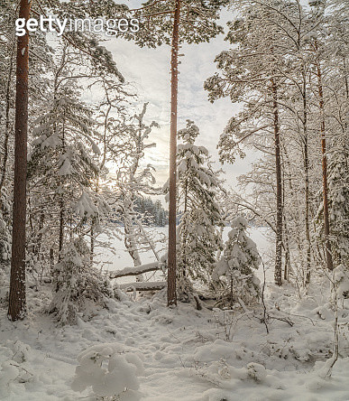 Winter wood lake - gettyimageskorea