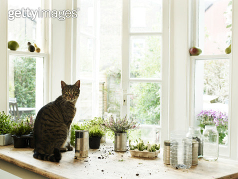 Cat sitting by potting plants - gettyimageskorea