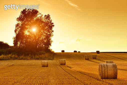 Hay Bales and Field Stubble in Golden Sunset - gettyimageskorea