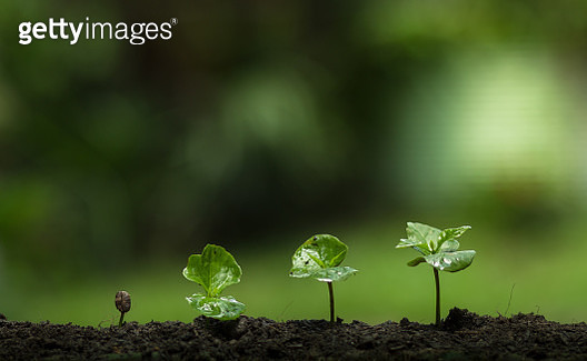 Close-Up Of Fresh Green Plant - gettyimageskorea