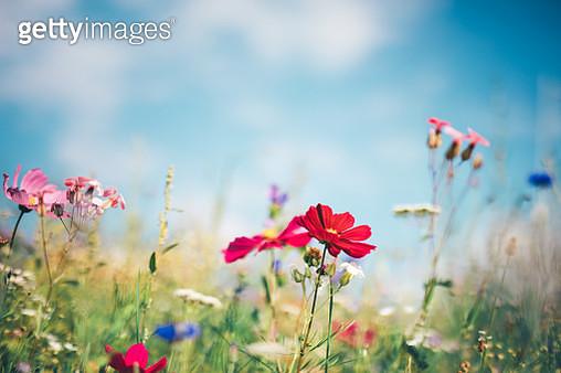 Spring Meadow - gettyimageskorea