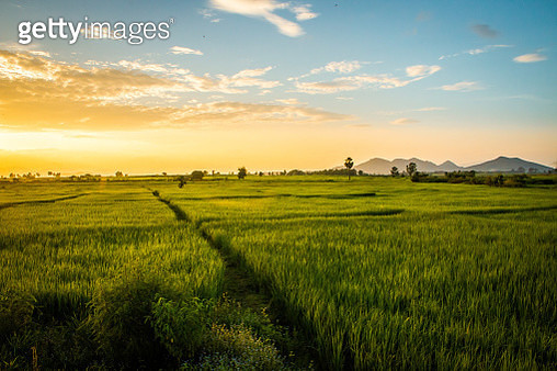 Scenic View Of Agricultural Field Against Sky During Sunset - gettyimageskorea
