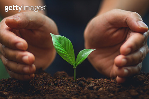 Cropped Hand Planting Seedling In Dirt - gettyimageskorea