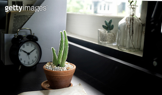 Close-Up Of Potted Plant And Alarm Clock On Table - gettyimageskorea