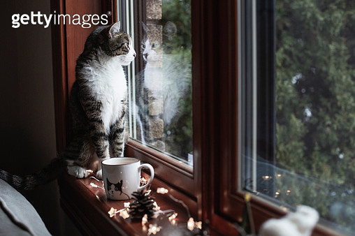 Domestic cat sitting on a window sill with Christmas lights - gettyimageskorea