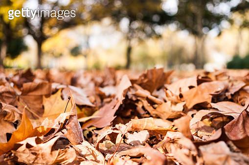 Autumn - gettyimageskorea