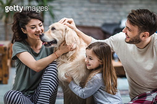 Young happy family enjoying with their golden retriever at home. - gettyimageskorea