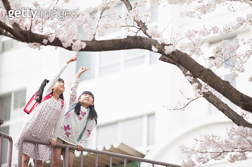 Japanese elementary school you plug in the cherry finger - gettyimageskorea