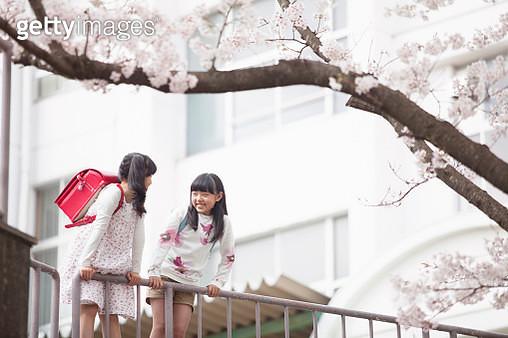 Japanese elementary school students stare Sakura - gettyimageskorea