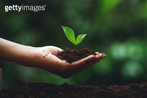 Cropped Hand Planting Seedling In Dirt - gettyimageskorea
