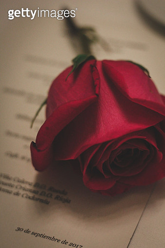Close-Up Of Red Rose On Book - gettyimageskorea