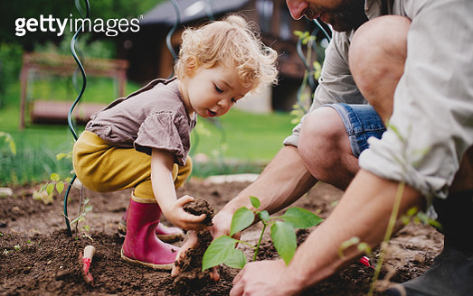 An unrecognizable mature father with small child outdoors gardening. - gettyimageskorea