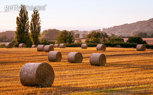 Straw Bales, Field, Hereford, Herefordshire, England - gettyimageskorea