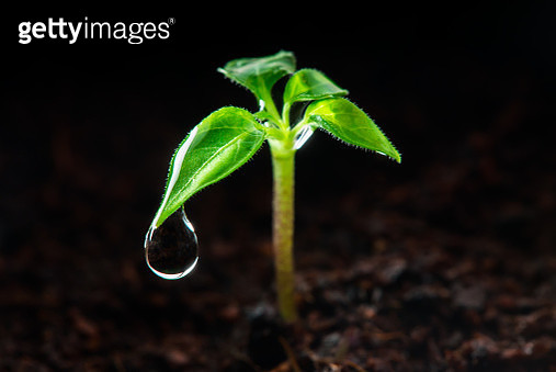 Small green plant growing on soil - gettyimageskorea