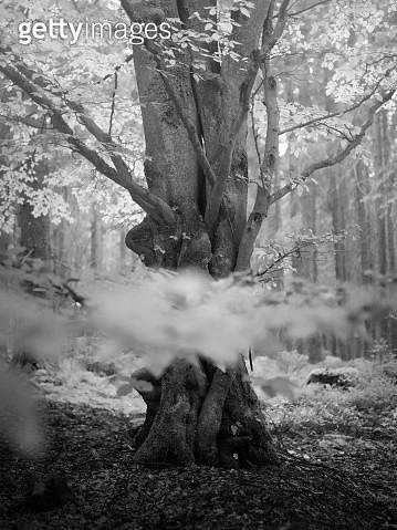Serene soothing forest scene - gettyimageskorea