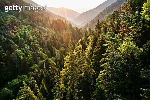 Borjomi Kharagauli National Park, Georgia - gettyimageskorea