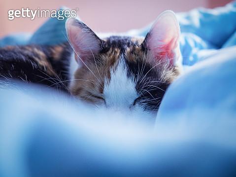 Close-Up Of Sleeping Cat - gettyimageskorea