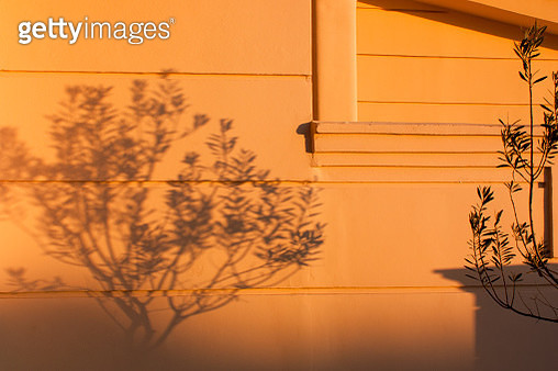 Olive tree shadows - gettyimageskorea