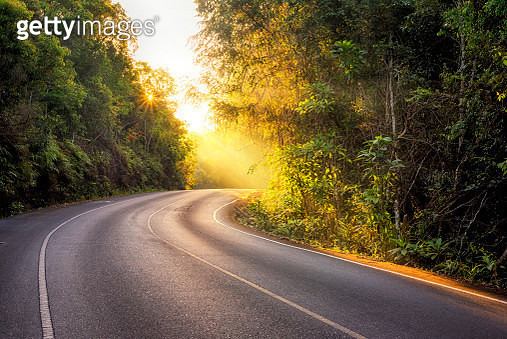 road in the tropical forest with warm light morning time - gettyimageskorea
