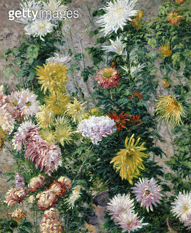 <b>Title</b> : White and Yellow Chrysanthemums, 1893 (oil on canvas)<br><b>Medium</b> : oil on canvas<br><b>Location</b> : Musee Marmottan, Paris, France<br> - gettyimageskorea