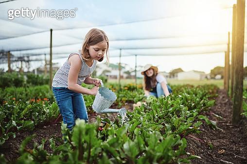 Going organic - gettyimageskorea