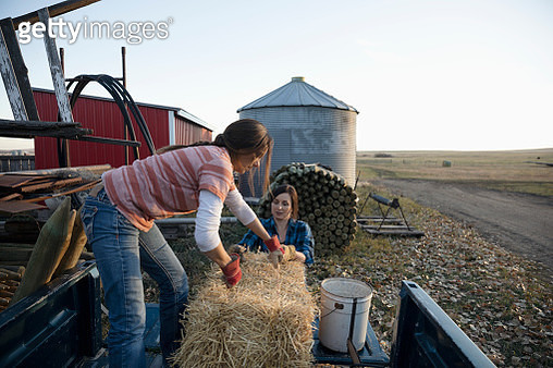Female farmers lifting hay bale onto pickup truck on farm - gettyimageskorea