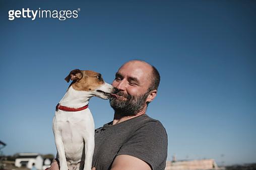 Jack Russel Terrier licking face of  smiling owner - gettyimageskorea