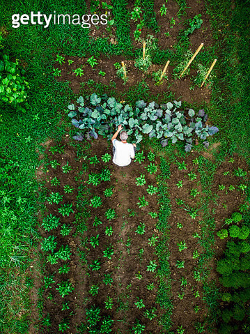 Aerial top down view of man working in vegetable garden - gettyimageskorea