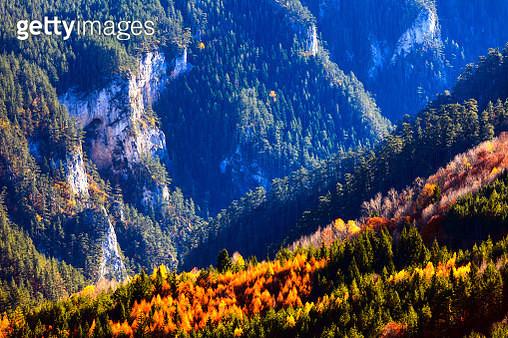 Rhodope Mountain, Bulgaria - November 2012: Autumn Woods - gettyimageskorea
