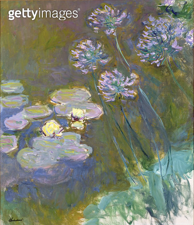 <b>Title</b> : Waterlilies and Agapanthus, 1914-17 (oil on canvas)<br><b>Medium</b> : oil on canvas<br><b>Location</b> : Musee Marmottan, Paris, France<br> - gettyimageskorea
