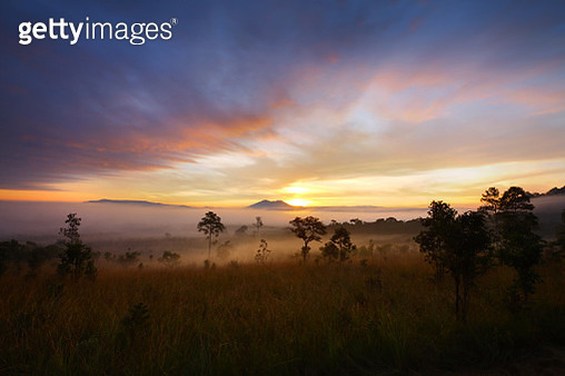 Misty Morning Sunrise At Thung Salang Luang National Park - gettyimageskorea