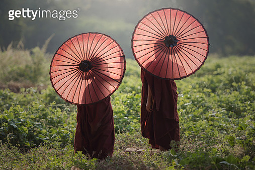 Two young monks carrying parasols in a field. - gettyimageskorea