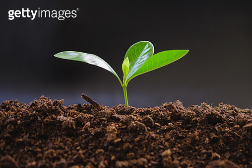 Close-Up Of Small Plant - gettyimageskorea