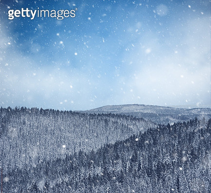 Winter View Over Forest - gettyimageskorea