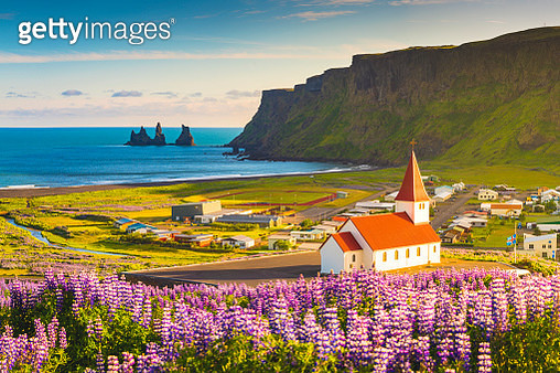 Vik i Myrdal, Southern Iceland. Fields of lupins in bloom and the town church. - gettyimageskorea