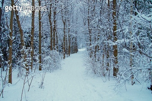 Snowy winter at the forest - gettyimageskorea