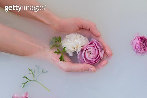 Hands of Caucasian woman cupping flowers in milk bath - gettyimageskorea