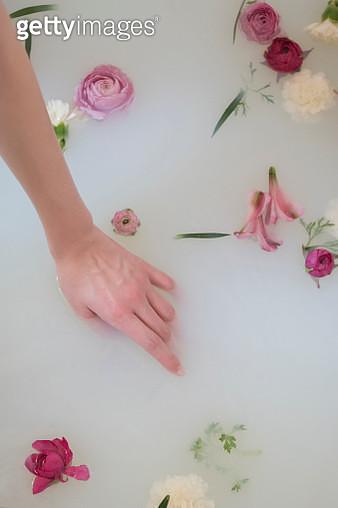 Hand of Caucasian woman in milk bath with flowers - gettyimageskorea