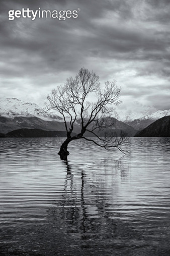 The Tree At Lake Wanaka In New Zealand - gettyimageskorea