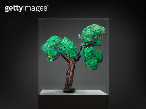 Recycling gallery exhibition  - Recycled tree in glass box - gettyimageskorea