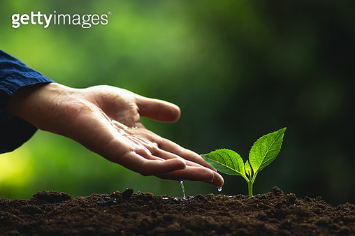 Cropped Hand Watering Sapling On Mud - gettyimageskorea