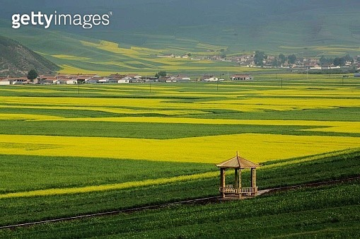 Scenic View Of Rice Paddy - gettyimageskorea