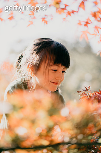 Adorable 4 year old Eurasian girl smiling at red Japanese maple leaves - gettyimageskorea