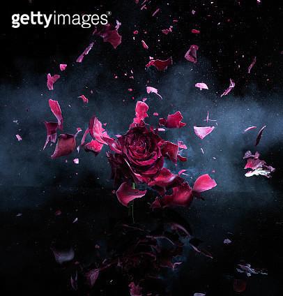 Exploding Flower - gettyimageskorea