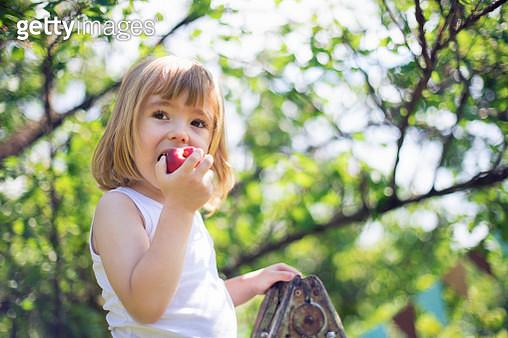 Little child picking peaches - gettyimageskorea