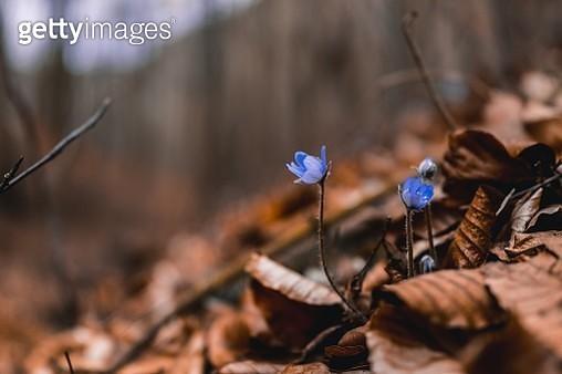 Spring - gettyimageskorea